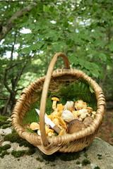 Panier de champignons