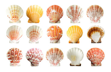 set of shells, isolated on white