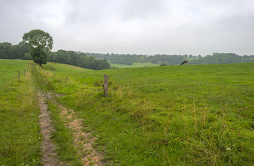 Footpath along a meadow in summer