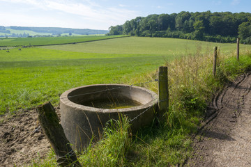 Water for cattle along a footpath in summer