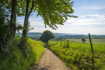 Road through a rural landscape in summer
