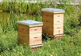 deux ruches dans un pré