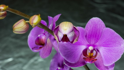 Beauty orchid blooming