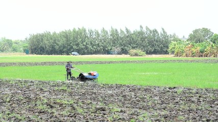 Farmer use Tractor and Trailer towing on Paddy and rice field