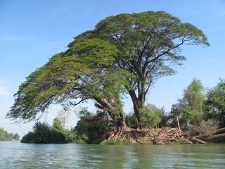 Baum am Fluss
