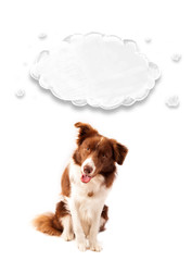 Cute border collie with empty cloud