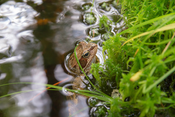 toad sitting in a stream
