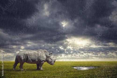 Foto op Aluminium Neushoorn Thirsty Rhino