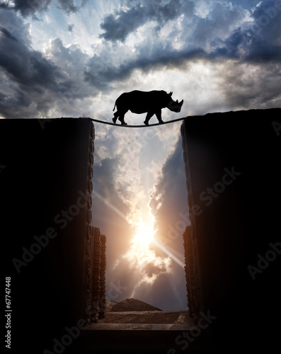 Foto op Canvas Neushoorn Rhino over the abyss
