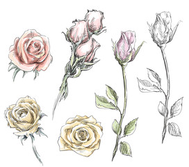 set of hand drawn roses. Vector flowers illustration.