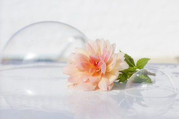 soap bubbles and flower