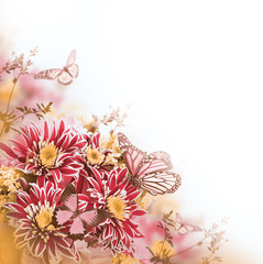 Bright spring chrysanthemum, floral background