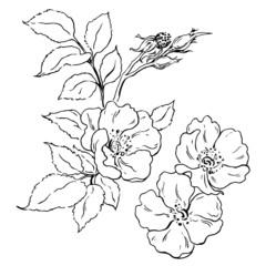 Canker-bloom