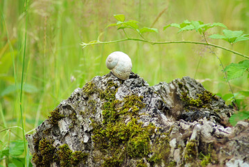 snail shell on stump on meadow