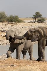 Elefantenbegrüßung