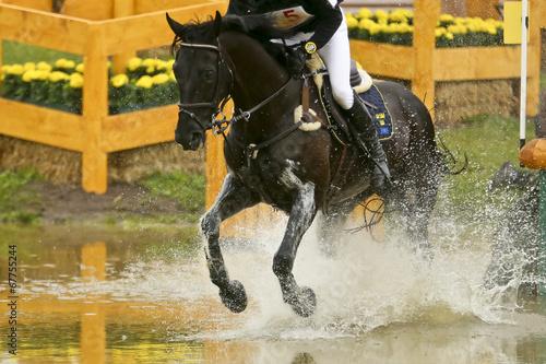 Tuinposter Paardensport Rappe im Wasserhindernis