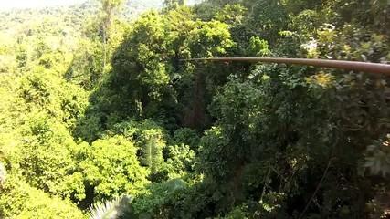 Tarzan in the jungle Thailand