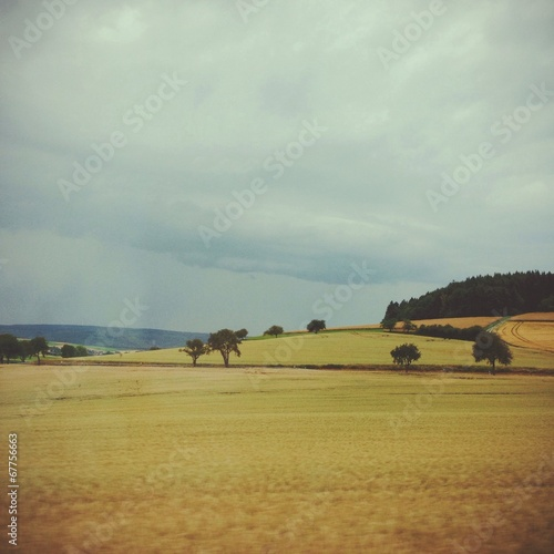 canvas print picture Summer field