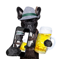 bavarian dog