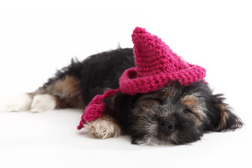 Tired puppy with hat lying on the floor
