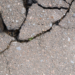 Fragment of a cracked asphalt