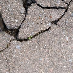 Fragment of a cracked asphalt