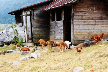 The hen house in the mountains