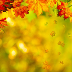 Abstract autumnal backgrounds with beauty bokeh and maple foliag