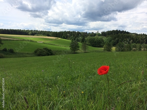 canvas print picture Sommer Landschaft