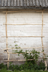 Green creeper plant climbing a  ladder, wall  background