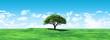 Obrazy na płótnie, fototapety, zdjęcia, fotoobrazy drukowane : Widescreen tree landscape
