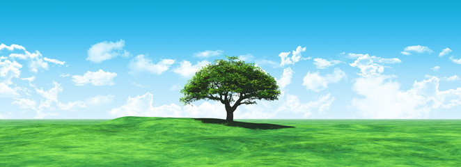 Widescreen tree landscape