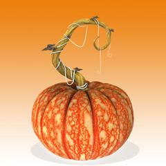 Pumpkin halloween.