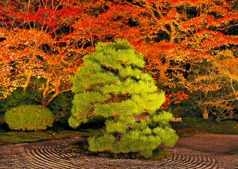 夜の南禅寺 天授庵の松
