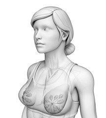 Female breast artwork