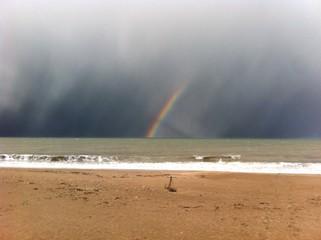rainbow on sea