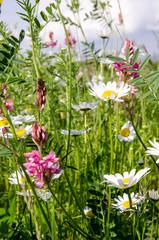 Auszeit: Blumenwiese in der Pfalz :)