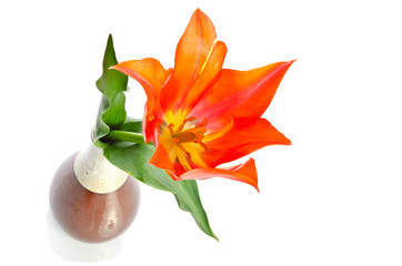 Beautiful tulip in a ceramic vase isolated on white background