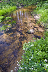 clean summer  river in nature reserve forest