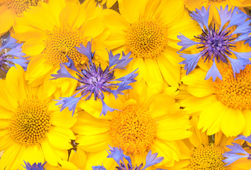 Yellow and Blue Flowers as a Background