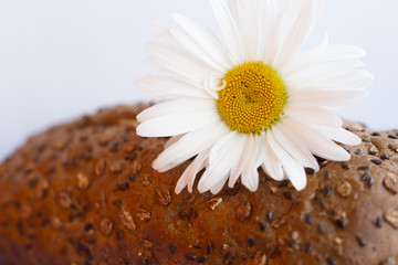 Homemade bread with cereals and chamomille on a white background