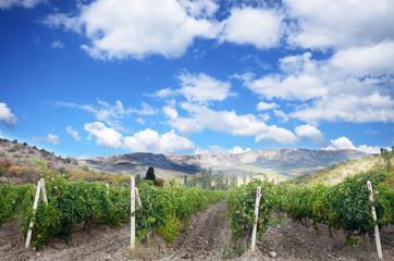 Vineyards crimea ukraine