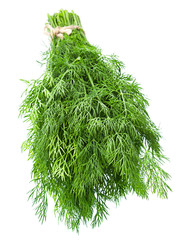 Dill herb closeup