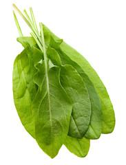 Sorrel herb
