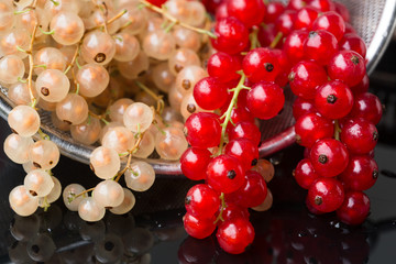 White and red currant - ribes