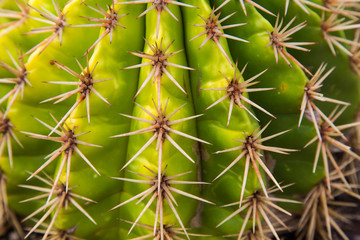 Closeup Spikes on Cactus