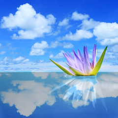 Purple lilies on blue sky reflection in the water with beautiful