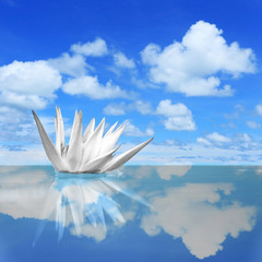 White lilies on blue sky reflection in the water with beautiful