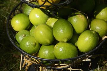 Zitrusfrucht, Limetten