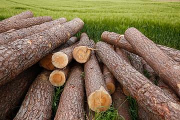 Tree trunks lying in a green field